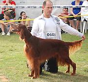 Israel, Tel Aviv, The International Dog Show 2010 Irish Setter or Red Setter
