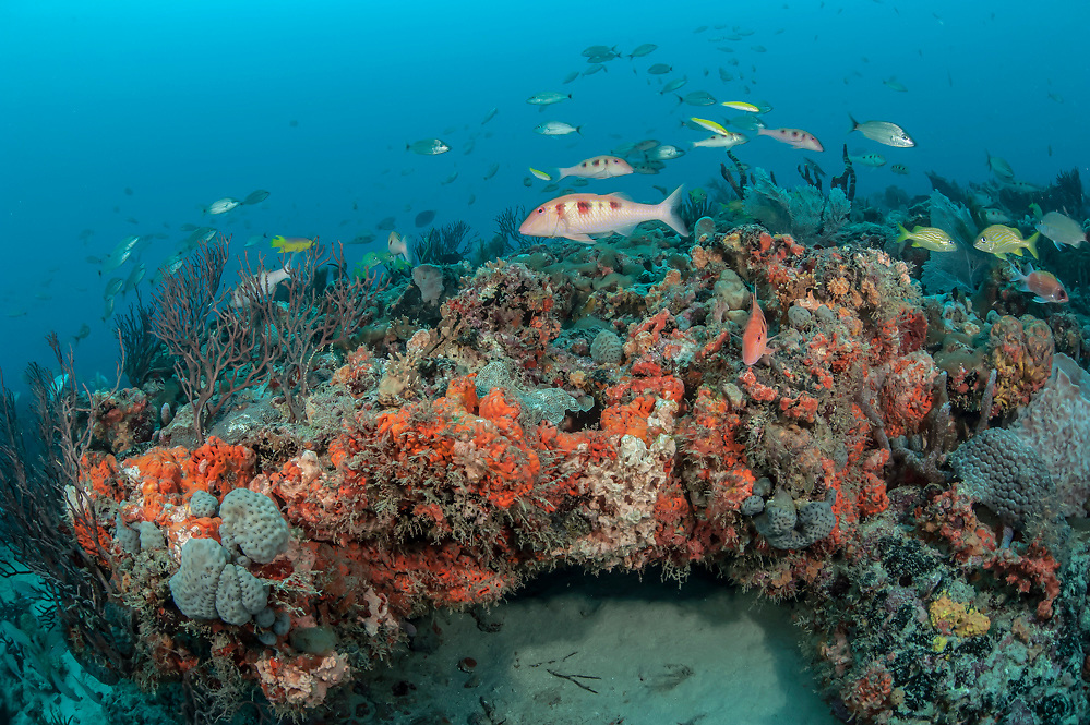 The Coral reef offshore Jupiter, Florida, United States is encrusted with a variety of corals and sponges and home to a large number of fish species.
