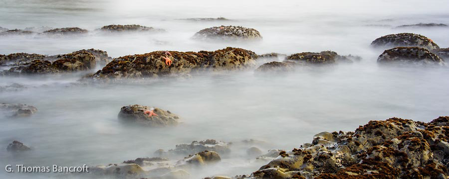 A few ochr sea stars clung to rocks at low tide as the waves came in and out.  I used a slow shutter speed to create a ghostly feeling to the scene.
