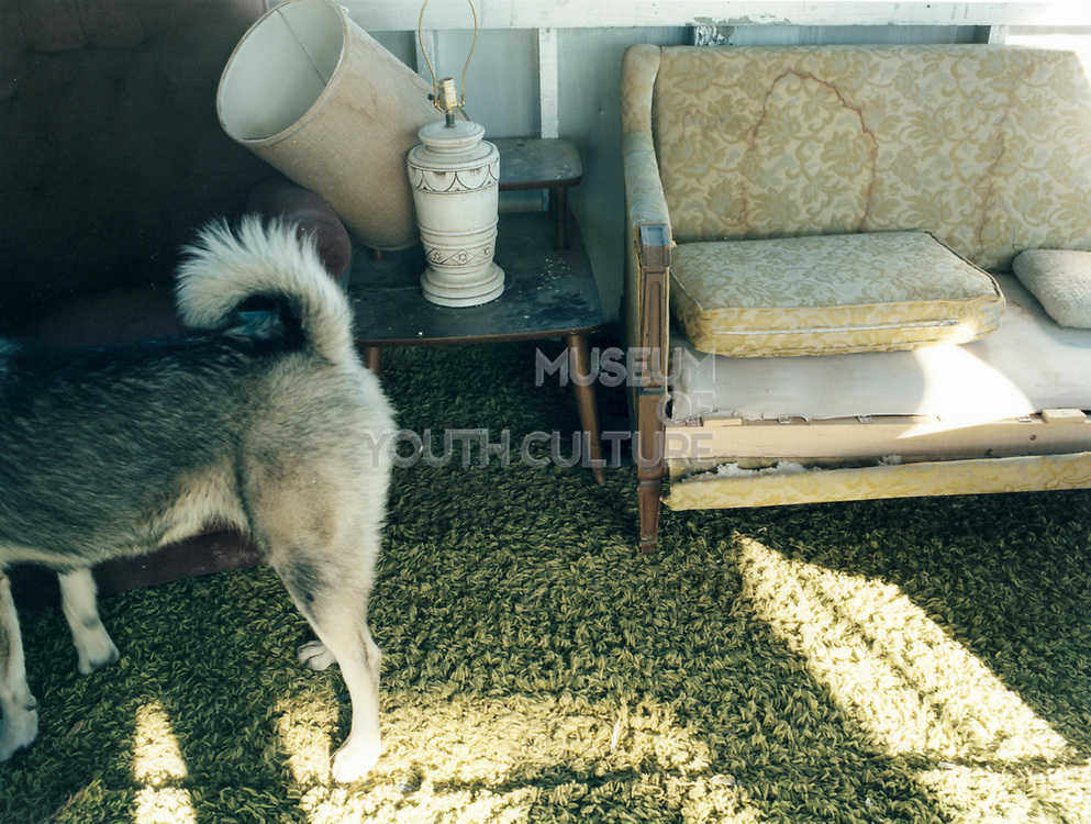 Partial view of a dog tied up standing by broken stained furniture.