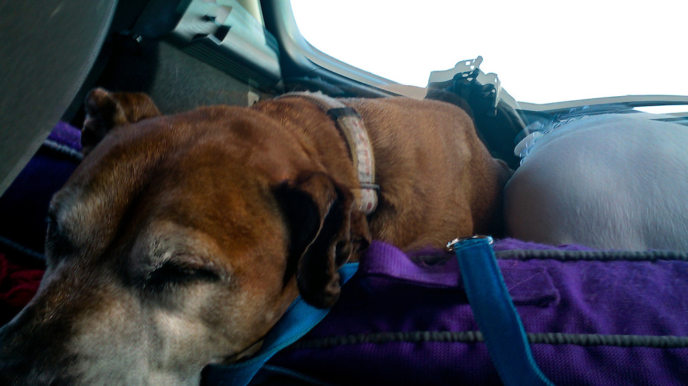 Ms. October snuggling with Houdini while dreaming on the road trip from FL to MA
