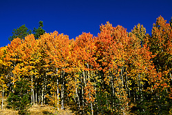 California: Fall color, Hope Valley..Photo copyright Lee Foster, 510/549-2202, lee@fostertravel.com, www.fostertravel.com..Phooto #: caitin105