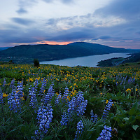 Beautiful Rowena Plateau along the Columbia River Gorge in Oregon. During the spring this part blooms with profuse wildflowers.