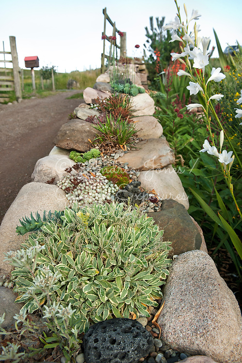Raised bed at the garden entrance with succulents and Gladioli<br /> <br /> 2 Durnamuck, Little Loch Broom, Wester Ross, Scotland