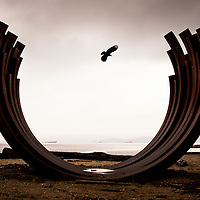 A lone crow flying through Whale Ribs sculpture at Sunset Beach.