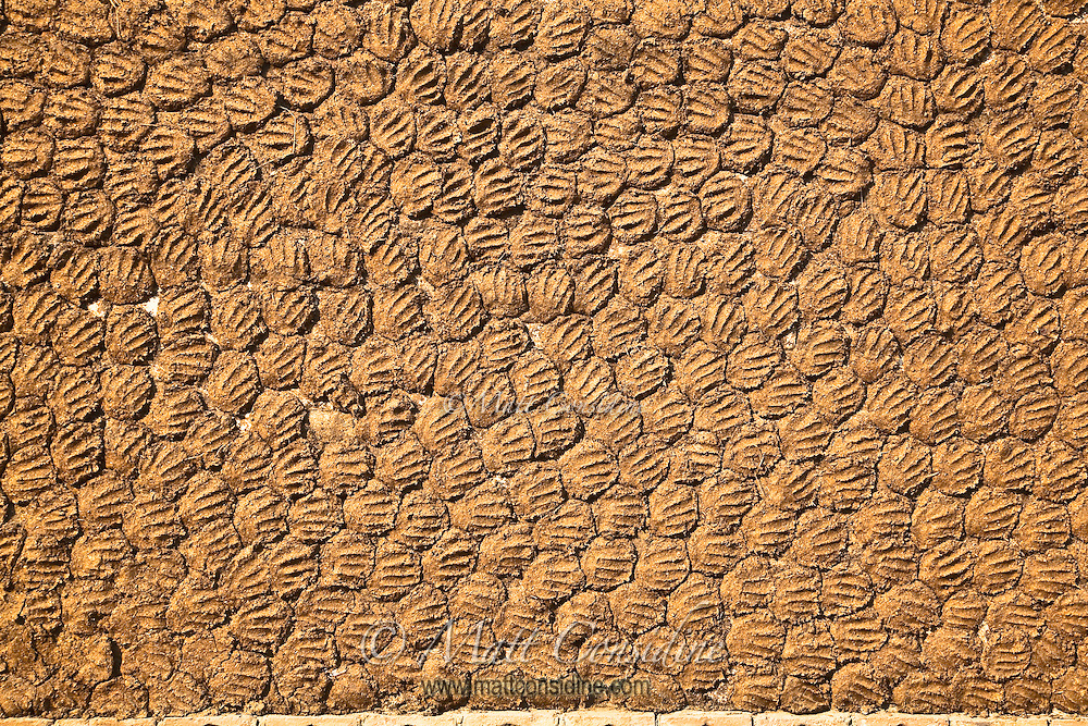 Cow dung drying on a wall to be used as a fuel for cooking.<br /> (Photo by Matt Considine - Images of Asia Collection)