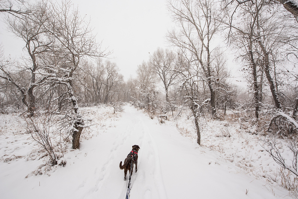 Odessa playing in the snow by the Platte River, Colorado.