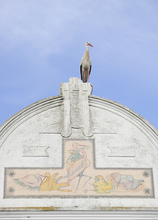 White stork, Ciconia ciconia, on town house, Los Barruecos, Extremadura, Spain
