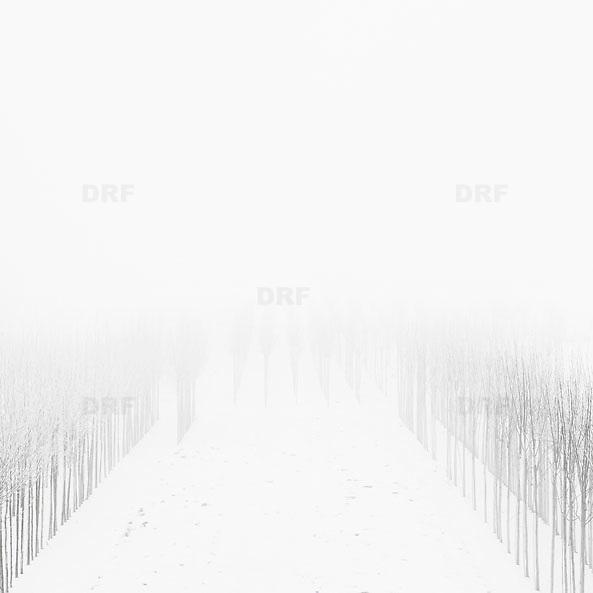 Nederland, 30 december 2010 Winterlandschap omgeving Tiel, kleine bomen in aanplant staan in de sneeuw op mistige dag., schoon , sfeer, sfeerbeeld, slecht zicht, slechtziend, slechtziende, sneeuw, sneeuwval, space, spiegelbeeld, spiritueel, spirituele, ssneeuwen, stil, still, stilleven, stillshot, stilte, stock, stockbeeld, stockfoto, surrealistisch, surrealistische omstandigheden, symbolisch, symbolische, tree, uitzicht, vergezicht, vergezichten, verte, vervaagd, vervaagde, visueel gehandicapt beperkt, vredig, vredige, vriezen, vrij, vrijheid, wazig, wazige, weer, weersomstandigheden, weersomstandigheid, weersvoorspelling, wei, weide, weidsheid, weiland, weiland. Landscape, white, wijdheid, wijds, wijdsheid, winter, Winterkou, winters, winters weer, winterse, winterse taferelen, wintertijd, wintertime, winterzon, wit, wit dek, witte, zo vrij als een vogel, zwart wit, zwitserleven, zwitserleven gevoel, , neerslag, Netherlands, niemand, no person, Nobody, omgeving, ongerept, onthaasten, ontspanning, open, opname, piece of art, platte land, platteland, polder, polder landschap, poldergebied, polderlandschap, readymade, romantisch landschap, ruimte, ruimtelijk, ruimtelijke, ruimtelijke omgeving, ruraal, rurale omgeving, rust, rustgevend, rustiek Foto: David Rozing