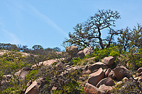Live Oak trees and shrubs grow amoung the boulders at Enchanted Rock State Natural Area. Texas.
