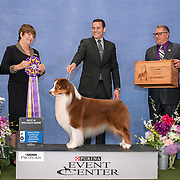 US Australian Shepherd National 2019