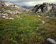 AA00678-00...MONTANA - Alpine meadows near Fossil Lake in the Absaroka-Beartooth Wilderness.