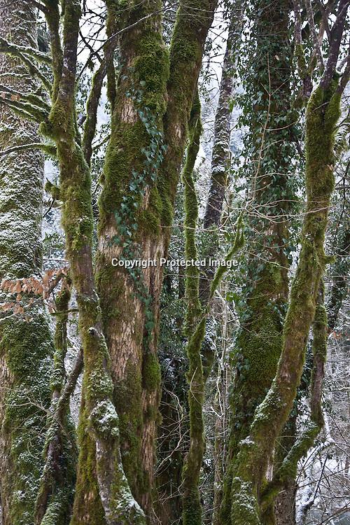 new year holidays In the Doubs river valley - France  /  nouvel an et cacances  dhiver dans la valle du Doubs en france