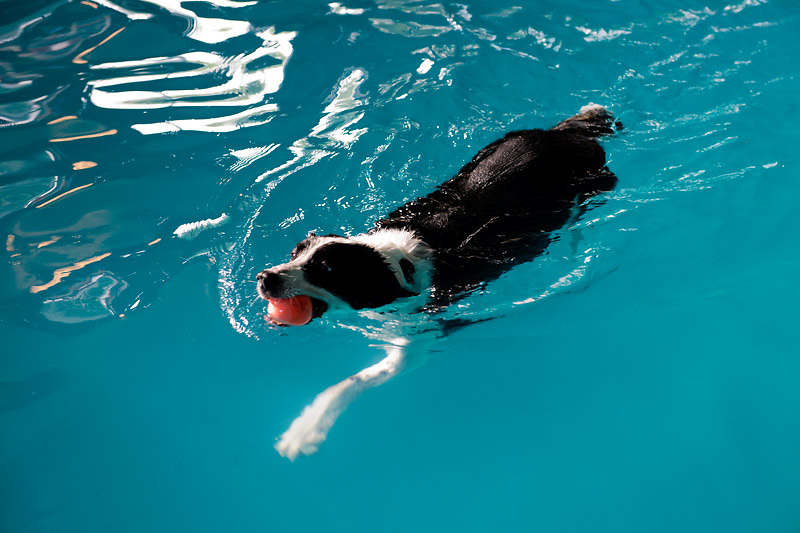 At K9 H20 (http://www.k9h2o.net/), swimming provides a low impact exercise for dogs who have an injury, weight problem, conditioning issue or just need help learning to swim. Kendall De Menech, the owner, helps dogs as well as other animals regain mobility and balance through aqua therapy.