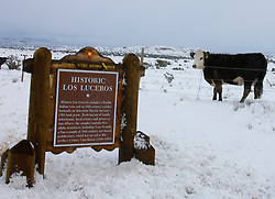 A cow watches a historical marker outside of Espanola, NM<br />