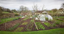 Charles Dowding's organic vegetable garden