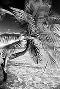 Maldives. Classic palm tree. 1990