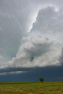 The updraft of a supercell thunderstorm towers above a lone tree near Lingle, Wyoming.