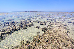 Corals lie underwater on a shallow reef at the northern end of Augustus Island in Camden Sound on the Kimberley coast.