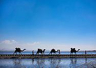 Karrayyu nomad people crossing the Metahara lake. Omo valley, Ethiopia.
