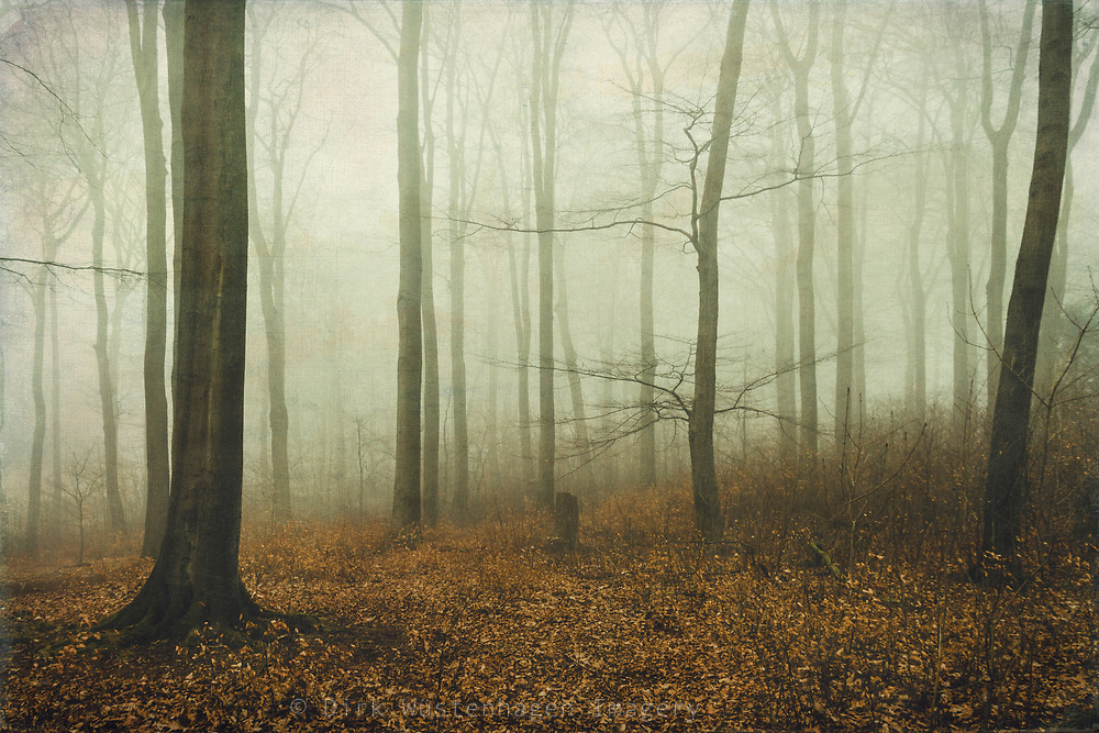 Deciduous forest in Winter on a misty day.