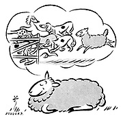 (A sheep dreams of herding a pack of dogs into a pen)