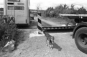 Dog walking by sleeping policeman, Glastonbury, Somerset, 1989