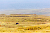 WY02371-00...WYOMING - Bobby Picklesimer ridding the open range during a rain storm on the Willow Creek Ranch. MR# P10
