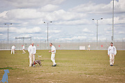 Several groups of handlers working with their dogs in one of the exercise yards at Coyote Ridge Corrections Center.  Professional pet pictures by Michael Kloth.