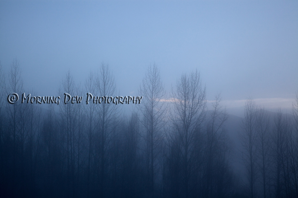 A heavy ice fog settles over the tres at the base of the Chugach Mountains in Anchorage, Alaska
