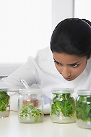 Female lab worker examining glass jars with plant material recording observations