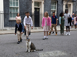 © Licensed to London News Pictures. 30/08/2019. London, UK. School children on a visit to Downing Street attempt to stroke Larry the cat. The government has asked the Queen to suspend Parliament in the days after MPs return to work in September - a few weeks before the Brexit deadline of October 31st. Photo credit: Peter Macdiarmid/LNP