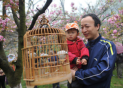 A man views the birds hung from cherry trees with his child at the Xishan Park in Guilin City, southwest China s Guangxi Zhuang Autonomous Region, March 16, 2013. More than 70 cages of birds were displayed for the tourists to view at a cherry forest here Saturday, March 16, 2013.. Photo by Imago / i-Images...UK ONLY.Contact..