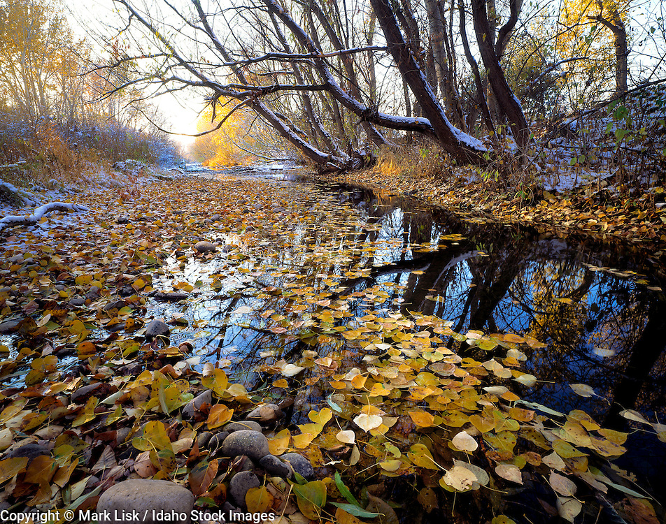 Idaho. Cottonwood foliage blankets the banks of the Boise River.