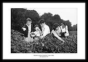 Barn plukker bjørnebær, i Sandyford 1959. Dekorative bilder av Irsk liv på 1950 tallet.