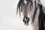MENEWA MEANS GREAT WARRIOR IN CREEK NATIVE AMERICAN INDIAN TRIBE.<br /> <br /> THIS WILD MUSTANG IS A TRULY A GREAT WARRIOR &ndash; HE IS A LEADER. YOU CAN SENSE  HIS ALERTNESS, AND HIS STEADFAST GAZE AND STRENGTH VIBRATE DEEP WITHIN HIS VERY ESSENCE. I&rsquo;M IN AWE OF THIS MAJESTIC HORSE.