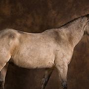 Fine Art kunst fotografie Quarterhorse manege Montferland