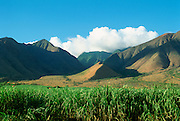 Sugar Cane Fields, Maui, Hawaii, USA<br />