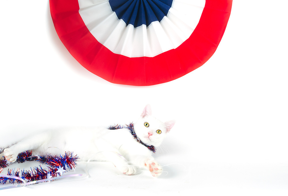 Henry, a domestic short-haired cat, poses for a Fourth of July holiday picture, July 5, 2017, in Coden, Alabama. (Photo by Carmen K. Sisson/Cloudybright)