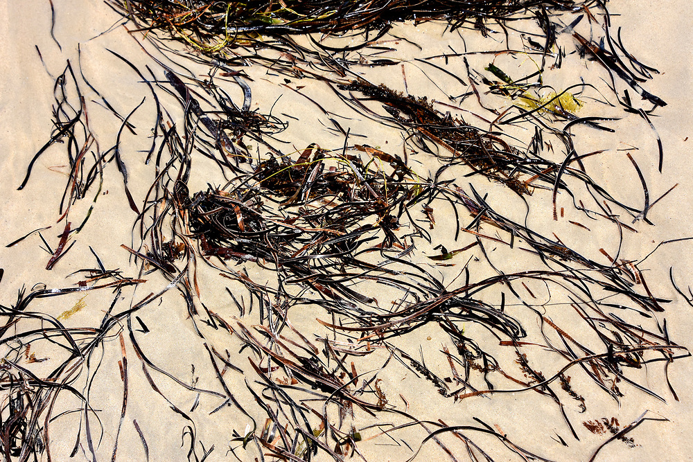 Seaweed on the sand at Freemantle beach free of pollution