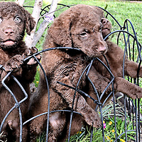 Grace Buchanan Puppies