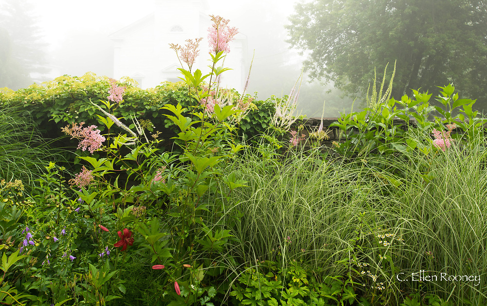 Summer borders on a misty morning Richard Ballinger's Garden in Rensselaerville, New York, U.S.A.