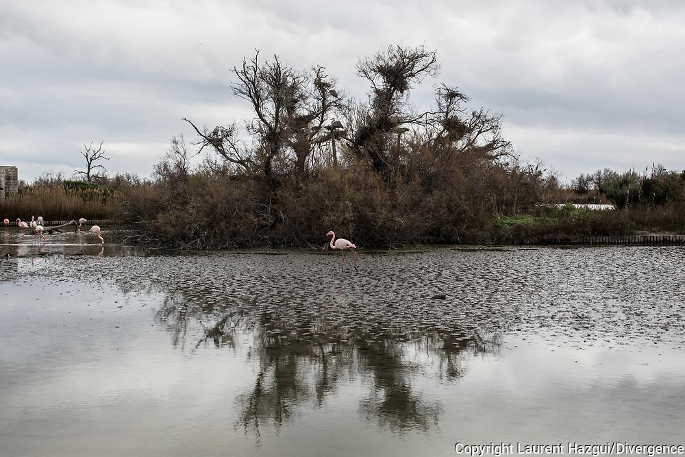 Janvier 2016. Camargue. Parc ornithologique de Pont de Gau.