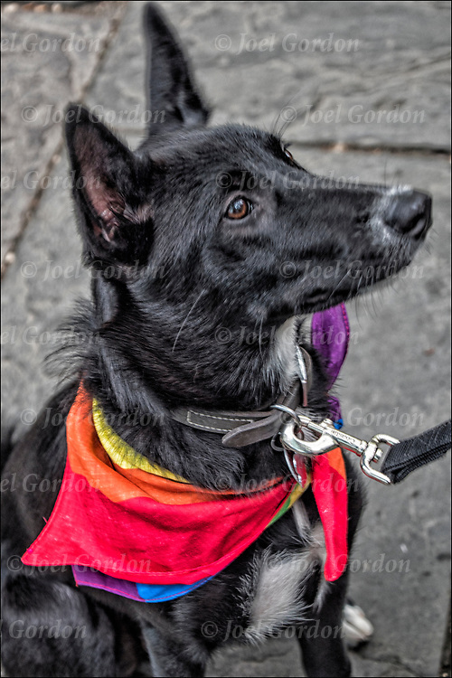 Dogs with their owner(s) at Pride March Parade or in the crowd for the march.