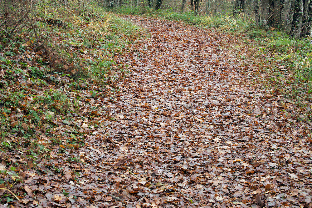 with fallen leaves covered path through woods