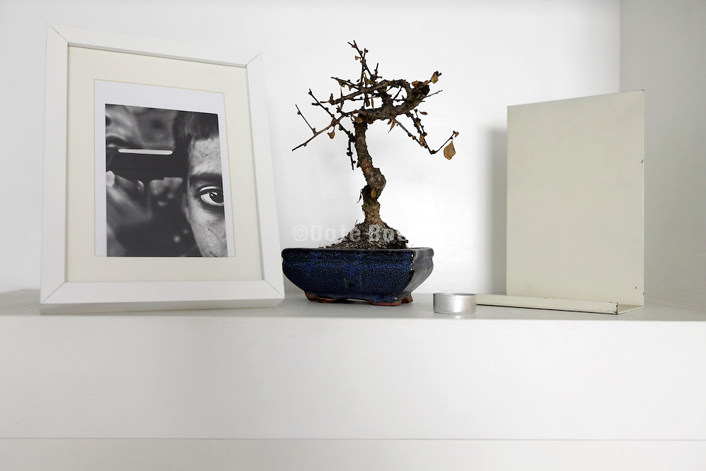 dead Bonsai tree with a framed photo of gun violence