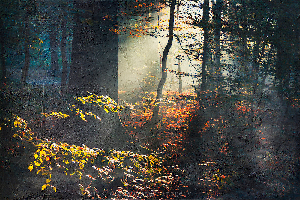 Morning sun and mist in a fall forest - texturized photoraph
