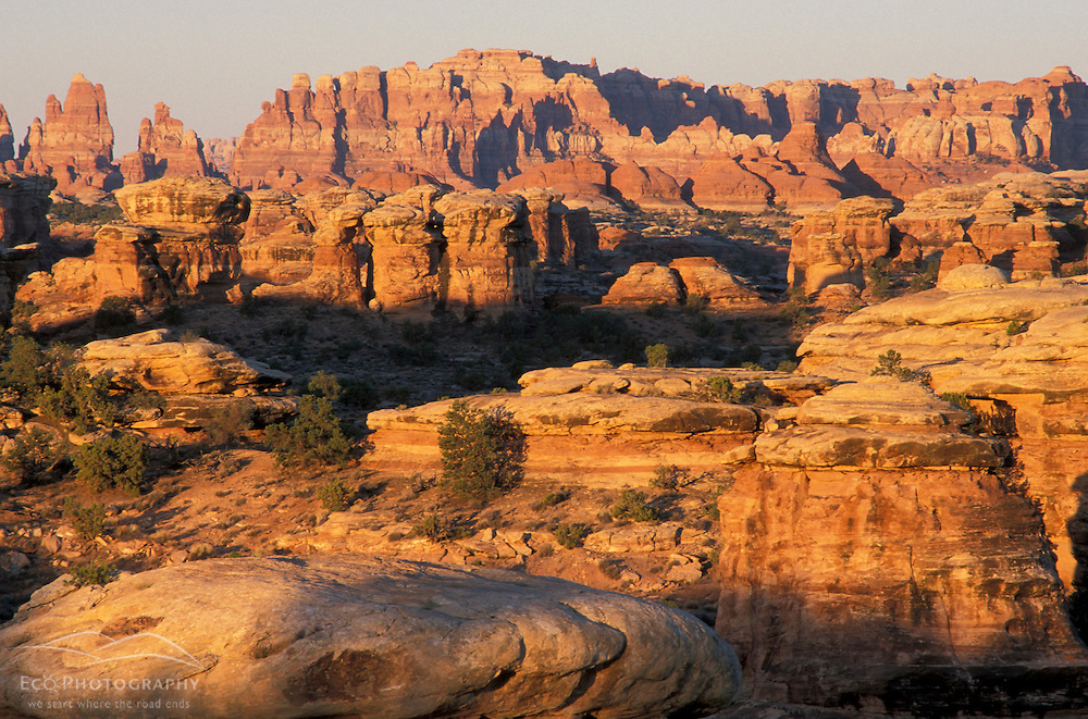Canyonlands National Park, UT..Dawn in the Needles District.  View from Pothole Point.  Cedar Mesa sandstone.