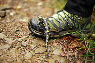 Salamander on Kenan's shoe, near Podnanos, Slovenia.