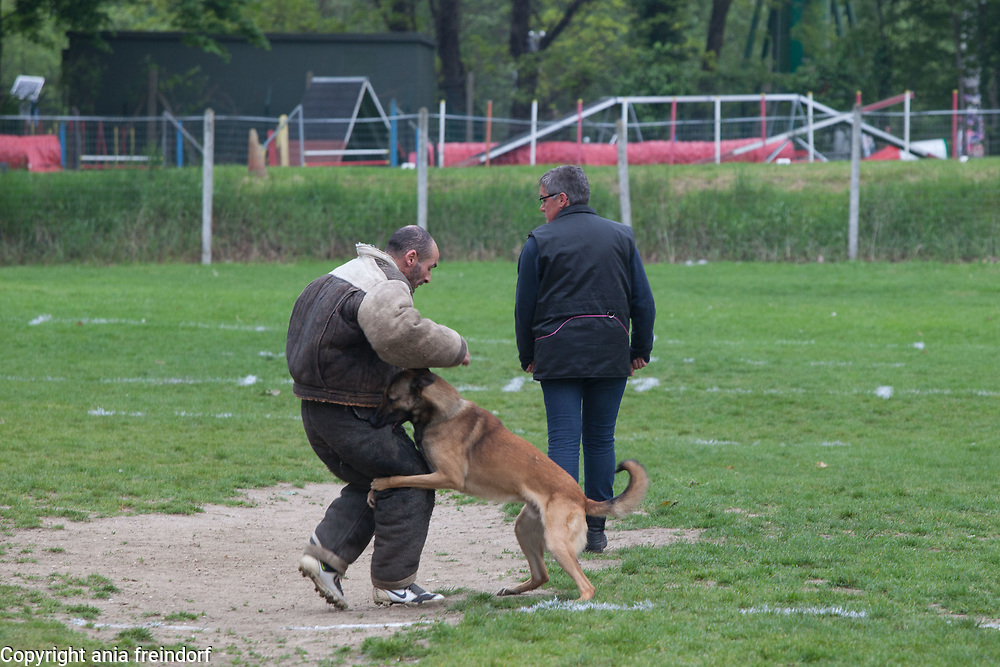 club canin argenteuil